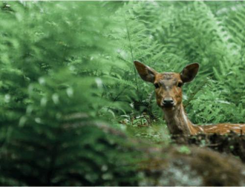 High Conservation Value (HCV) dan Pelestarian Biodiversitas