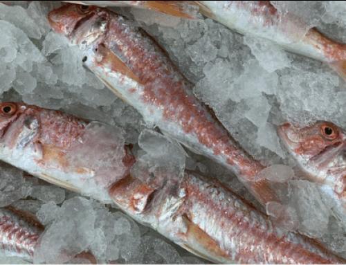 Urgensi cold chain management dalam industri pangan