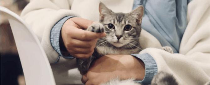 handling kucing